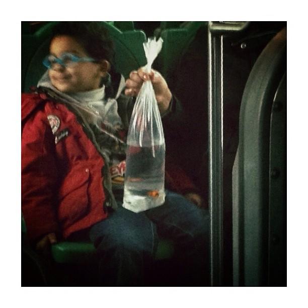 Poisson rouge lunettes bleues passengers for Achat poisson rouge paris 18
