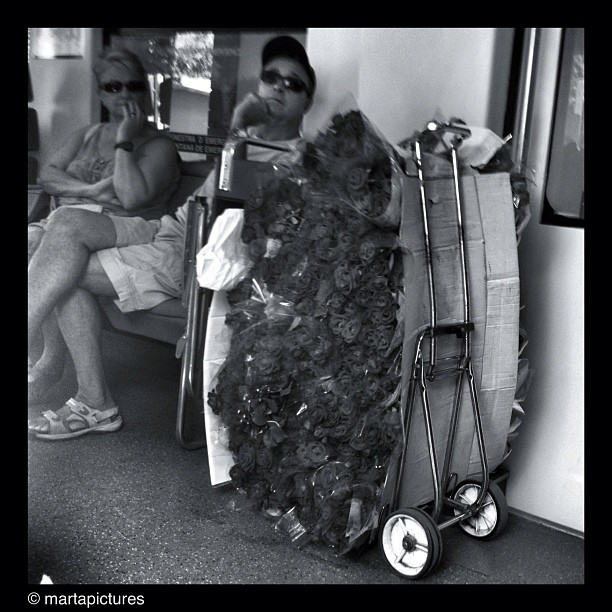 Vendo rosas                            by Marta Vall bestoftheday, blackandwhite, bw, igdaily, igers, igersbcn, instaaddict, instadaily, instagood, instagrammers, instamood, iphonegraphy, iphoneonly, iphonesia, monochrome, passengers, photooftheday, rosa, rose, statigram, streetphotography, streetphoto_bw, train, transport, tren, ubiquography, webstagram,